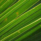 leaf close-up II by theblackazar