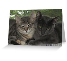 Cats Snuggling in Front of a Window Greeting Card
