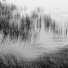 Lake Grasses Abstract by Barbara  Brown