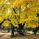 Fall by OksanaAyvaz