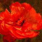 They Call It Poppy Love by Vickie Emms