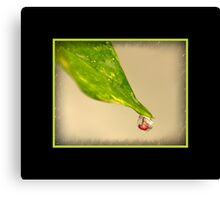 water drop and girl Canvas Print