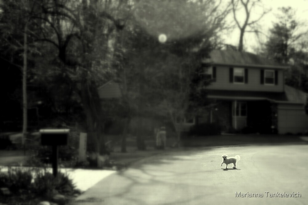 little stranger by Marianna Tankelevich
