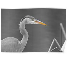 Heron in black and white Poster