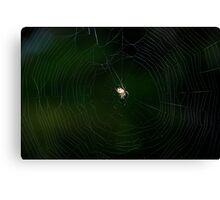 Tangled web... Canvas Print