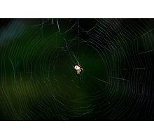 Tangled web... Photographic Print