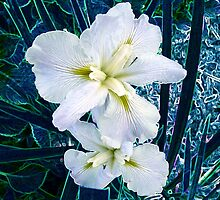 Flowers of Avatar by Deborah Clearwater