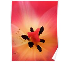 Heart of a Tulip Poster