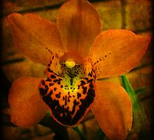 Antique Orchid by Deb Gibbons