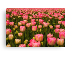 Candy Tulips Canvas Print