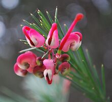 Native Grevillea by Lozzar Flowers & Art