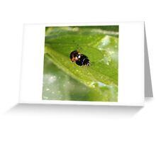Ladybirds in Love Greeting Card