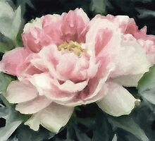 Soft peony by nellievin