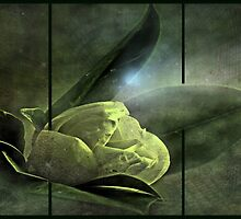 """""""Moonlight Serenade..."""" by Rosehaven"""