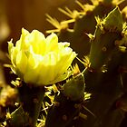 Sunshine cactus 1 by TeAnne