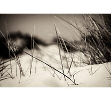 dune impressions Photographic Print