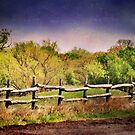 Along the Texas Road by Pat Moore