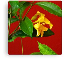 Yellow, Red and Green Canvas Print