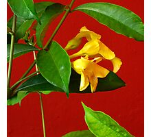 Yellow, Red and Green Photographic Print