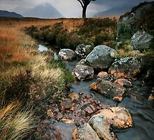 Scotland: The Dead Tree by Angie Latham