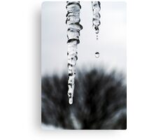 Melting Icicles Canvas Print