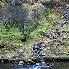 Waterfalls near Lake Vyrnwy No3 by StephenRB