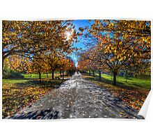 Autumnal Colours Poster