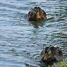 Ducks In a Row by fairielights