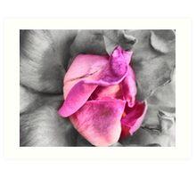 colour select rose Art Print