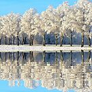 NATURES WINTER MIRROR by Johan  Nijenhuis