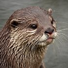 Portrait of an Otter. by Mark Hughes