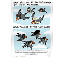 Amur Falcon Migration Poster