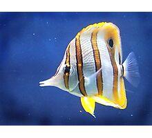Beautiful salt water fish Photographic Print