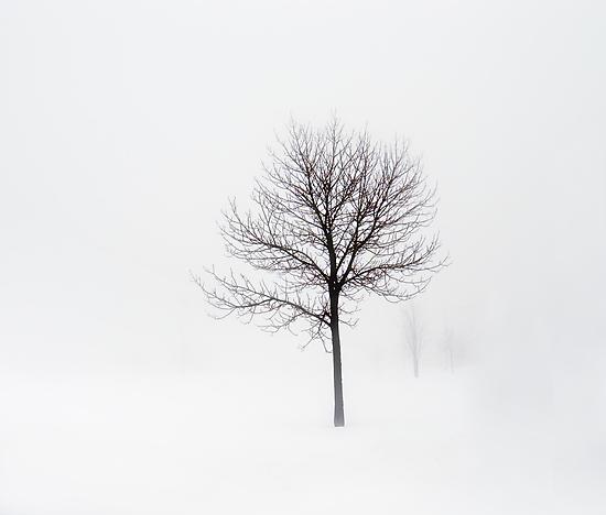 Minimum visibility by Angela King-Jones