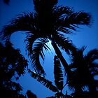 Moonlit Palm by Glennis  Siverson