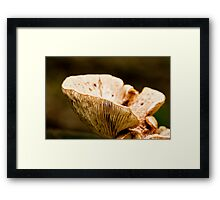 Nature's Natural Cup Framed Print