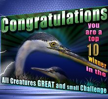 10 top winner banner All creatures Great and Small by imagetj