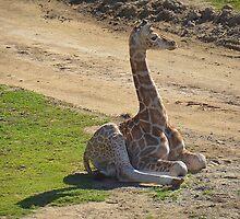 Baby Giraffe by Anne Smyth