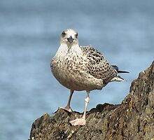 Seagull Rock by Dikkidee