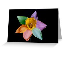 Colourful daffodil Greeting Card