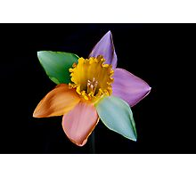 Colourful daffodil Photographic Print