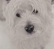 Westie by Linda Hoey