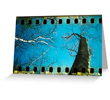 Walden Trees III - Concord , MA Greeting Card