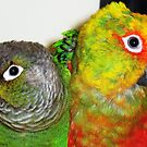 Two pets by loiteke