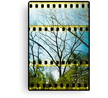 Convergence Of Branches Canvas Print