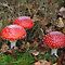 Fungi Season