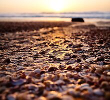shells@sunset by Victor Bezrukov
