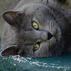 Lazy Cat Smokey! by Gabrielle  Lees