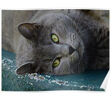 Lazy Cat Smokey! Poster