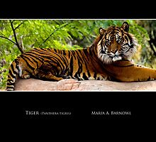 Lounging Tiger - - Posters & More by Maria A. Barnowl